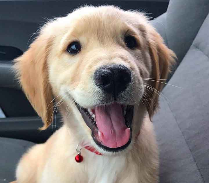 Puppy in Car Seat