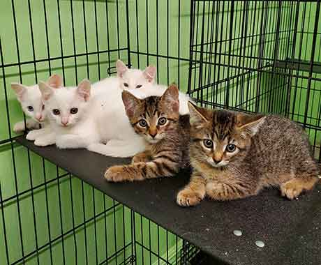 Rescue kittens in a cage