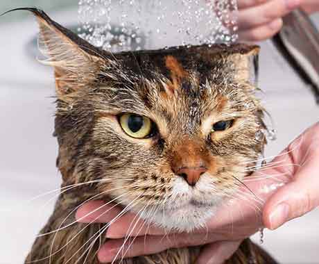 Pet Grooming Bath Cat